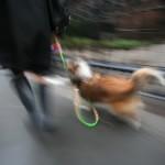 Signora con cane al guinzaglio