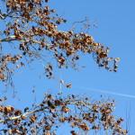 uccelli su un ramo osservano la scia di un aereo